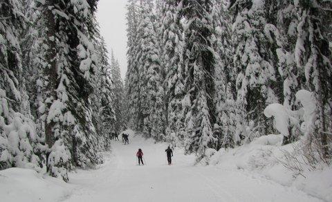 big trees, lots of snow