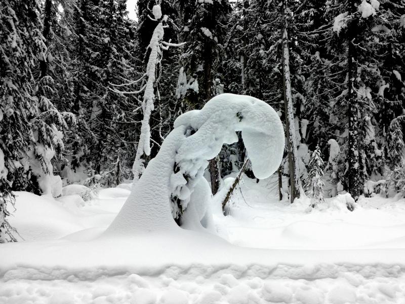 lh-snow-sculpture-jan-2014