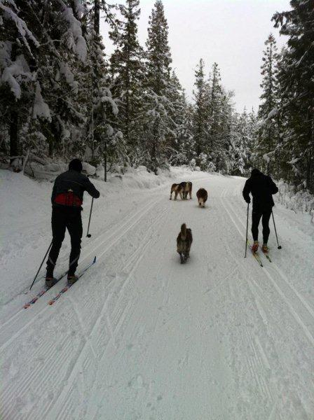 skiers-and-dogs