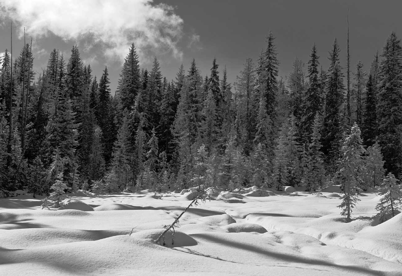 snow-humps-and-trees