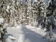 snowshoetrail